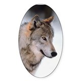 Photo Wolf Oval Sticker (10 pk)