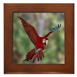 Flying Greenwing Macaw framed tile