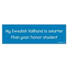 Swedish Vallhund / Honor Student