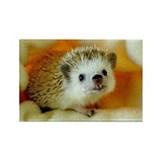 Jake Hedgehog Rectangle Magnet