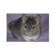 Chinchilla Rectangle Magnet (10 pack)