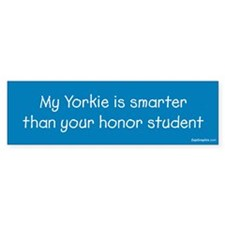 Yorkie / Honor Student