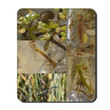Pond collage Mousepad
