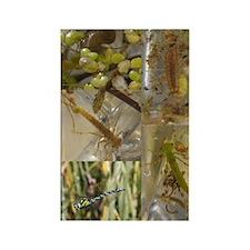 Pond collage Rectangle Magnet