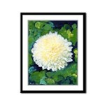 Riccoboni Chrysanthemum Framed Panel Print