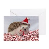 Maizy Greeting Cards (Pk of 20)