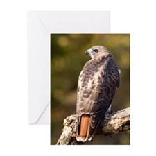 Red Tail Hawk Greeting Cards (Pk of 10)