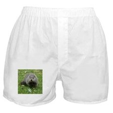 Groundhog Eating Boxer Shorts