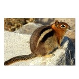 Ground Squirrel Postcards (Package of 8)