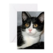 Tuxedo Shelter Cat Greeting Cards (Pk of 10)