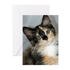 Calico Shelter Kitten Greeting Cards (Pk of 10)