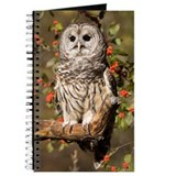 Barred Owl Journal