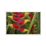 Kew Flower Photo Rectangle Magnet