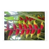 Kew Flower Photo Postcards (Package of 8)