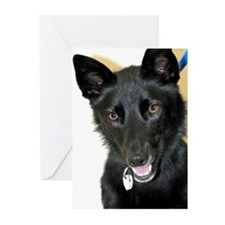 Belgian Shepherd Greeting Cards (Pk of 20)