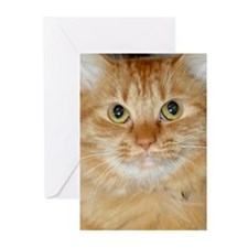 Orange Cat Greeting Cards (Pk of 20)