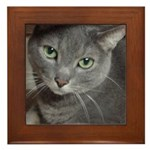 Gray Cat Love Framed Tile