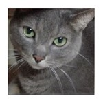 Gray Cat Love Tile Coaster