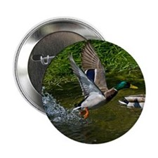 "Mallard Take-off 2.25"" Button (10 pack)"