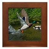 Mallard Take-off Framed Tile