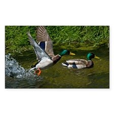 Mallard Take-off Rectangle Sticker 10 pk)