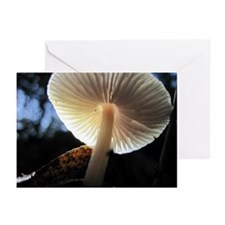 Mushroom Gills Backlit Greeting Cards (Pk of 10)