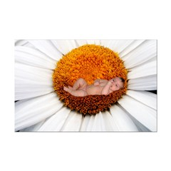 Daisy Flower Baby Posters
