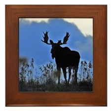 Bull at dusk Framed Tile