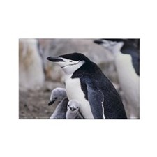 Penguin Mama and Babies Magnet