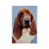 Bassett Rectangle Magnet (100 pack)