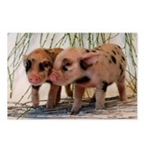 Micro pig Postcards (Package of 8)