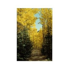 Aspen Fall Colors Rectangle Magnet