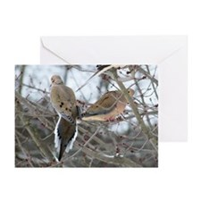 Mourning Dove Greeting Cards (Pk of 10)