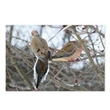 Mourning Dove Postcards (Package of 8)