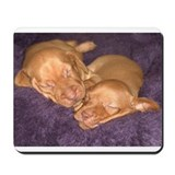 Cute Vizsla Puppies Mousepad