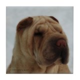 Chinese Shar-Pei Head Study - Tile Coaster
