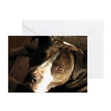 Pit Bull Lulu Greeting Cards (Pk of 10)