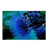 Blue Thistle Postcards (Package of 8)