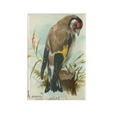 Goldfinch Bird VIntage Art Rectangle Magnet