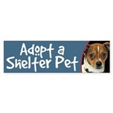 Adopt a Shelter Pet Bumper Sticker - Chihuahua