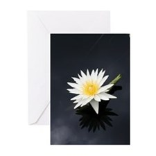 Water Blossom Greeting Cards (Pk of 20)