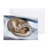 Funny Animals Greeting Card