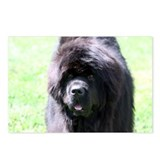 Newfie Newfoundland Dog Postcards (Package of 8)