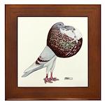 Champion Cropper Pigeon Framed Tile