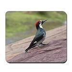 Acorn Woodpecker Mousepad