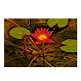 Yellow Ruben's Waterlily Postcards (Package of 8)
