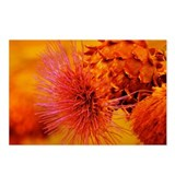 Red and Orange Thistle Postcards (Package of 8)