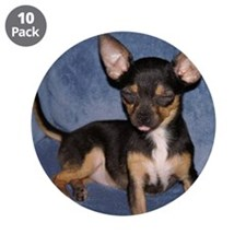 "Chihuahua 3.5"" Button (10 pack)"