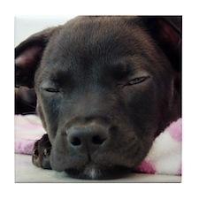 Sleeping Puppy Tile Coaster