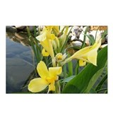 Canna Lily Postcards (Package of 8)